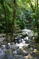 Stream in El Yunque